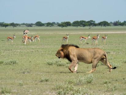 Botswana Safari on a Budget!