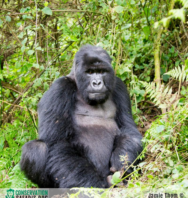 Rwanda Gorilla Safari 18