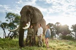 Elephant_interaction