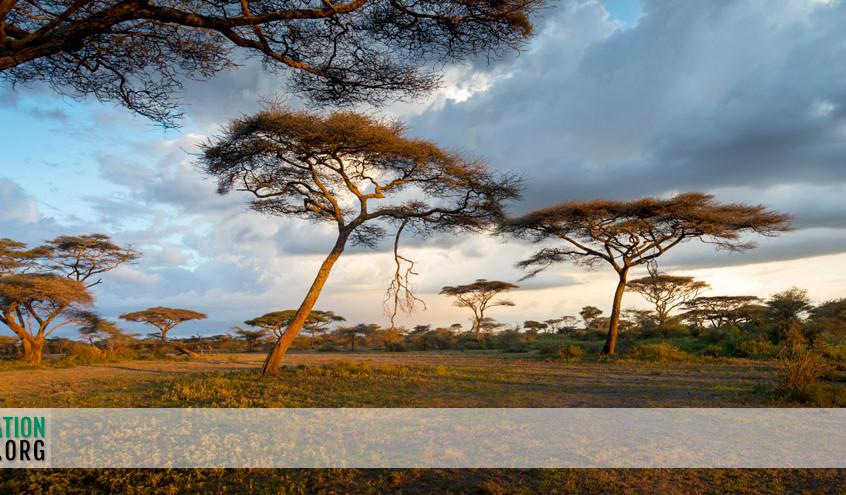 Ndutu landscapes 1