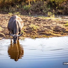 Northern Kruger