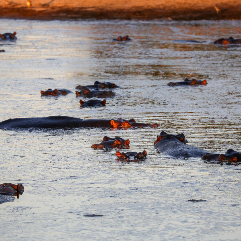 Idube Hippos at dusk