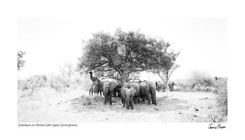 Elephants at Midday.jpg