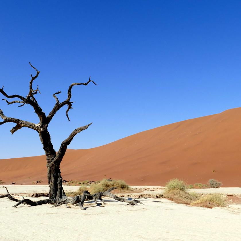 Deadvlei, Sossusvlei - Namibia