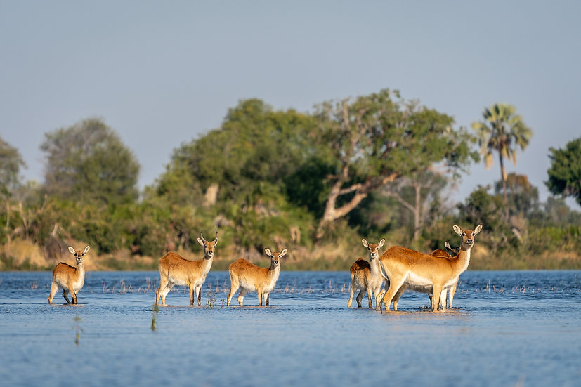 SIGNATURE WETLANDS BOTSWANA SAFARI - 10 Nights
