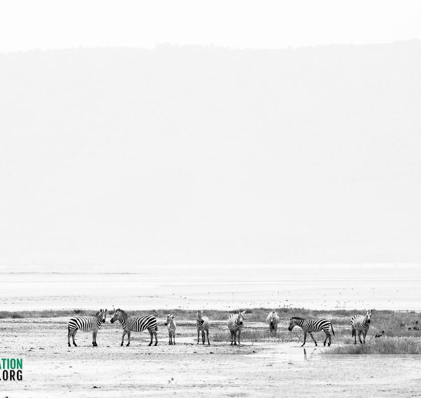 Ngorongoro Crater Jamie Thom 09