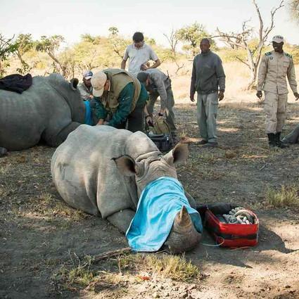 Botswana's rhino conservation dilemma