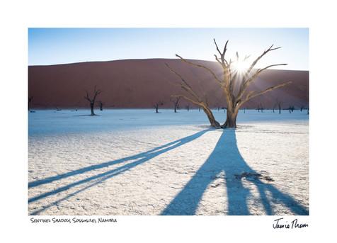 Sentinel Shadow.jpg