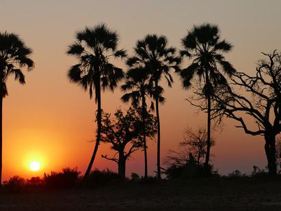 Botswana Photo Safari Essay 2 - John & Loraine