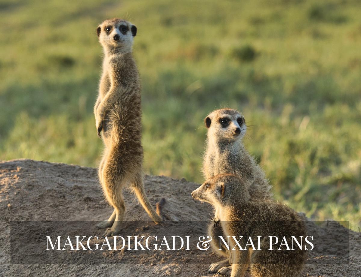 MAKGDIKGADI & NXAI PANS SAFARI