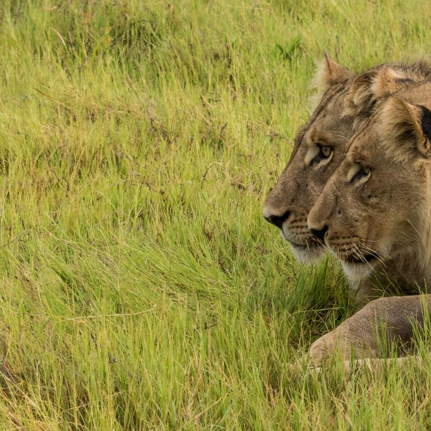 Botswana_Safari_Company__98A1140