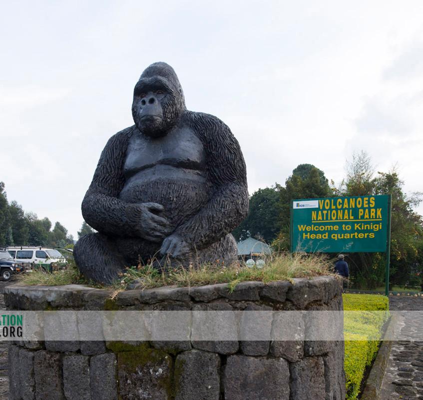 Rwanda Gorilla Safari 01