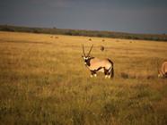Cape, Botswana and Vic Falls photo essay by Dabney H