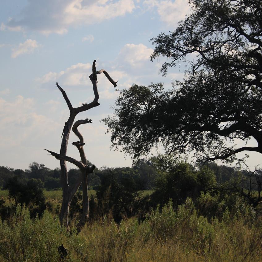 Kanana cycle of tree life
