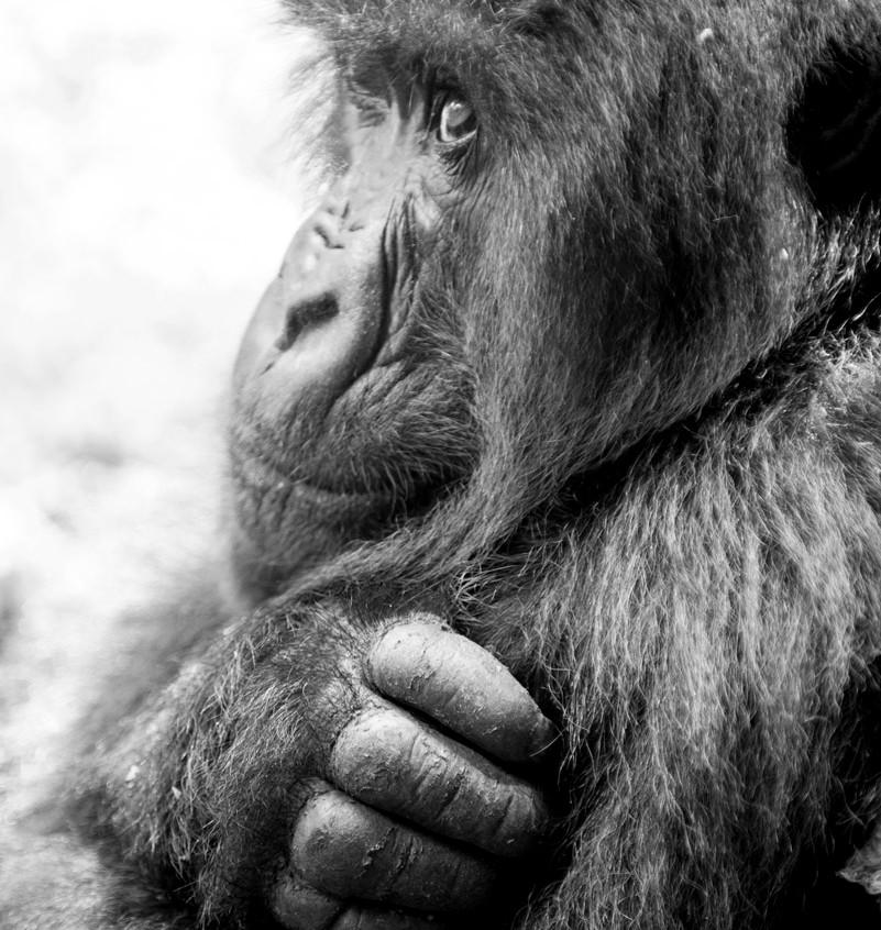 Rwanda Gorilla Safari 12
