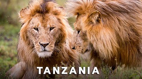 Tanzania_Safari.jpg