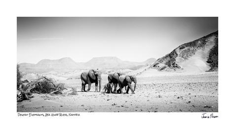 Desert Elephants Aba Huab.jpg