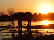 Thank you for everything! Our Botswana safari was amazing!