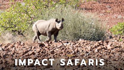 Impact_Safaris.jpg