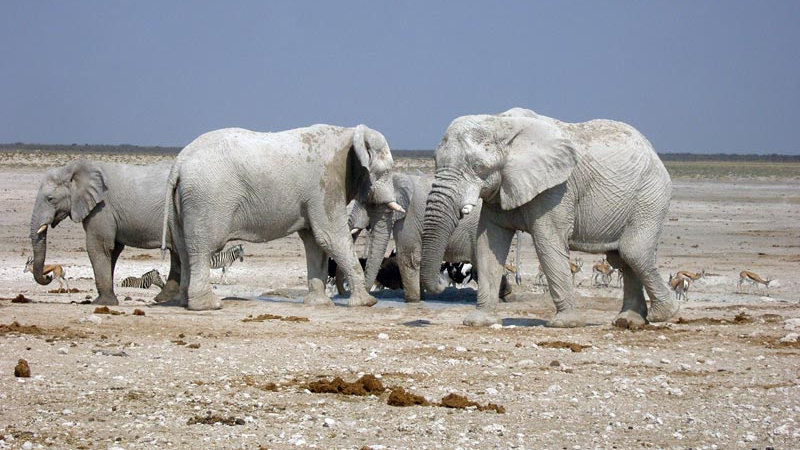 NAMIBIA SELF-DRIVE SAFARI - 10nts
