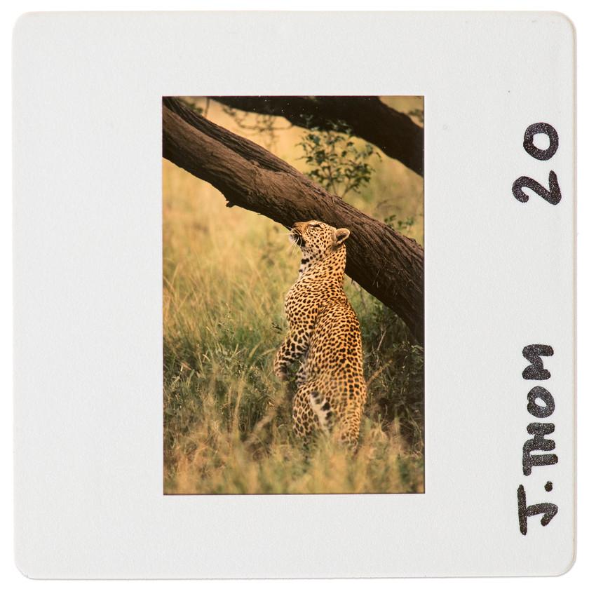 Kruger_safari_SouthAfrica