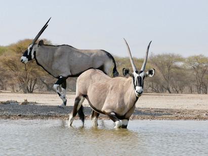 Botswana Photo Safari Essay 1 - John & Loraine