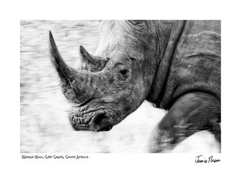 Raging Bull Rhino.jpg
