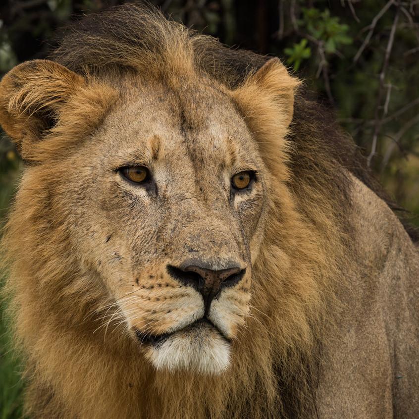 Botswana_Safari_Company__98A0759