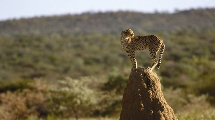 MY NAMIBIA - 11nts