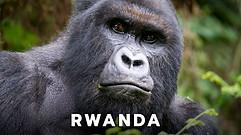 Rwanda_Gorilla_Safari.jpg