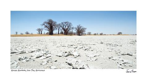Baines Baobabs.jpg
