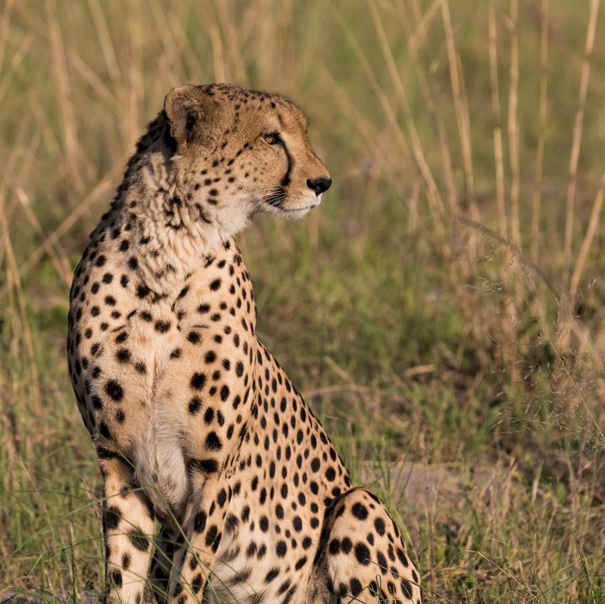 Botswana_Safari_Company__98A0503