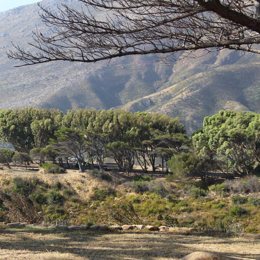Chapman's Peak road2