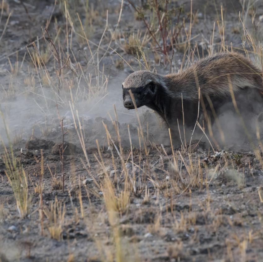 Botswana_Safari_Company__98A2136