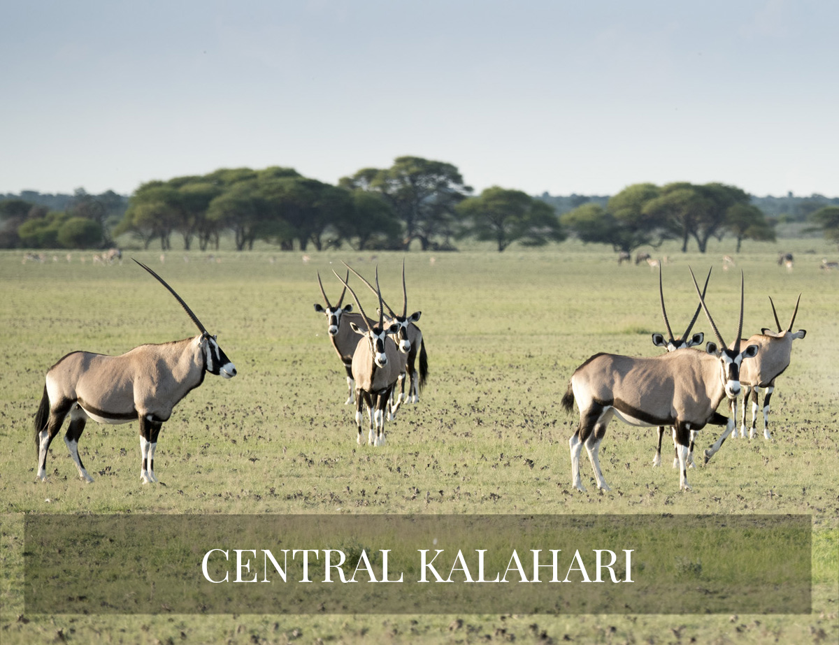 CENTRAL KALAHARI SAFARI