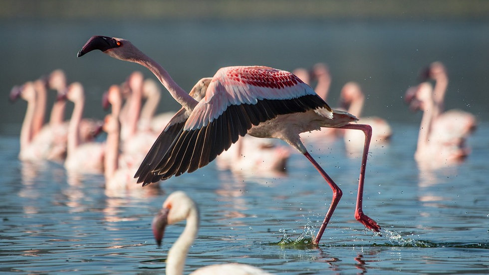 LAKES & PLAINS of KENYA - 5nts