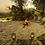 Thumbnail: OKAVANGO WALKING TRAIL - 3 Nights