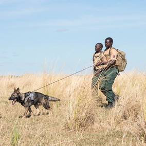 Preserving the Lower Zambezi River, one of the great wilderness regions in Africa; Zambia & Zimbabwe