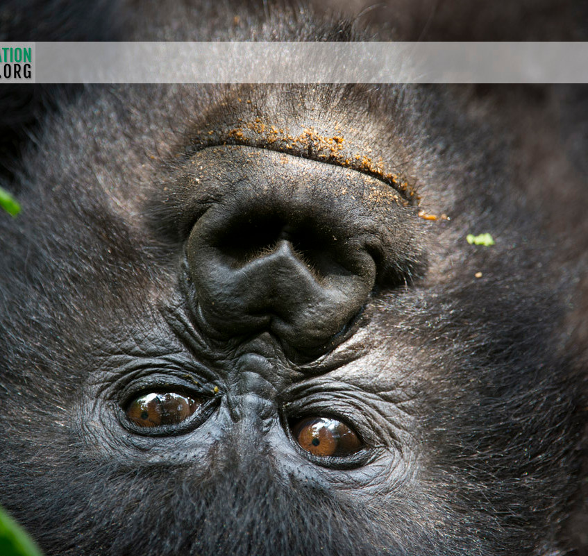 Rwanda Gorilla Safari 10