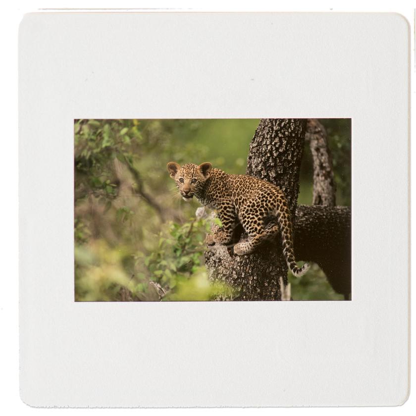 Sabi Sands_safari_South Africa