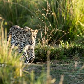 Luxury Zimbabwe Safari to Ruckomechi in Mana Pools NP