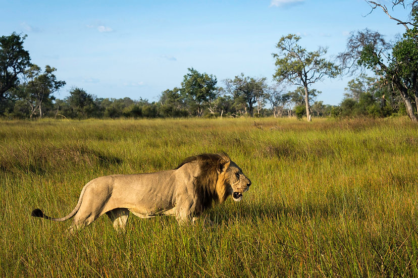 SUMMER PLAINS, BOTSWANA SAFARI - 7nts