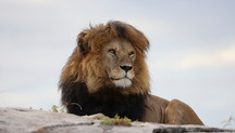 Epic Tanzanian Family Safari Adventure - photo story part 1