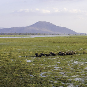 Malawi's Elephants for the Future