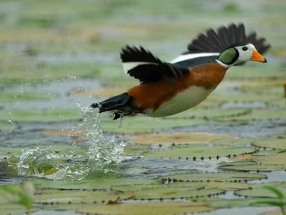 Okavango's 'Big 5' Birds