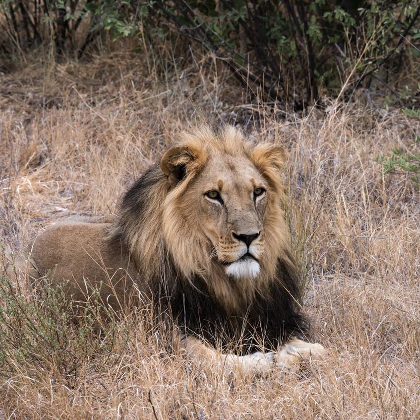 Botswana_Safari_Company__98A1713