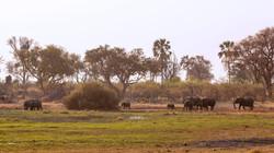 Camp Maru landscape Okavango Delta
