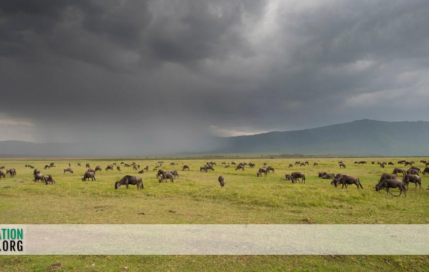 Ngorongoro Crater Jamie Thom 12