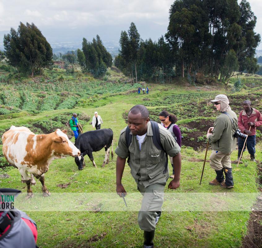 Rwanda Gorilla Safari 03