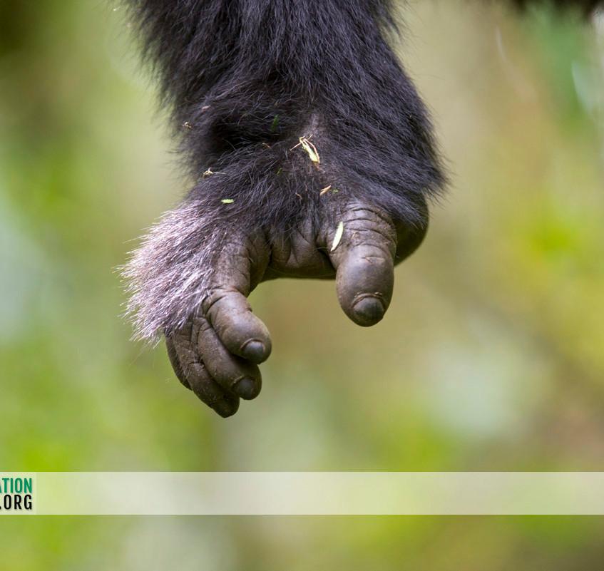 Rwanda Gorilla Safari 14